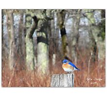 A Blue Bird on Sparks Lane Photographic Print