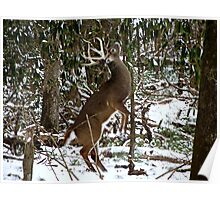 White Tailed Buck in the Snow Poster