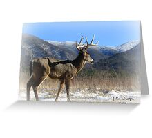 A Buck and Snowy Mountains Greeting Card