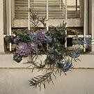 Window plant box by Marlene Hielema