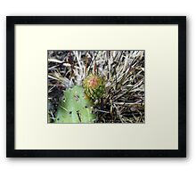 ©NS In Thorns IIAT Framed Print