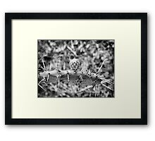 ©NS In Thorns IIIA Mono B Framed Print