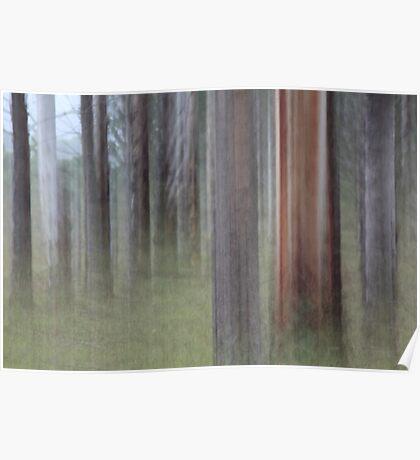 Eucalyptus impression. Poster