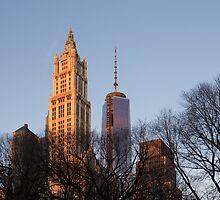 New York Skyline Through the Trees by Georgia Mizuleva