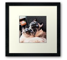 Things Are Looking Up! Framed Print