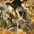 Mother and Child  by larry flewers