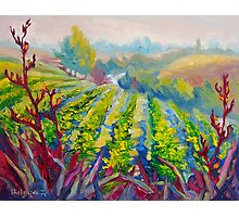 Vineyard Scene Oil Painting by Ekaterina Chernova Photographic Print