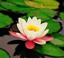 white flower by Orel