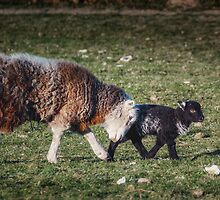 Shepherding Nudge by Tobias King