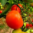 A world without tomatoes by Segalili