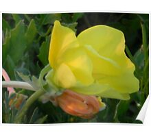 Poetry of Evening Primrose Poster