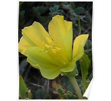 Time for the Big Sleep - Evening Primrose Poster