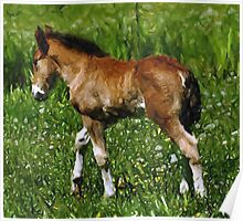 Mini Foal And Dandelions Miniature Horse Poster