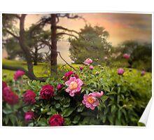 Peony Blossom Poster