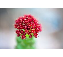 Red Petal Photographic Print