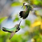 Hummingbirds Ensuing Battle by Christina Rollo