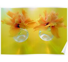 Apricot Hibiscus in Glass  Vases x Two  Poster