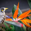 Bird in Paradise by Chris Brunton