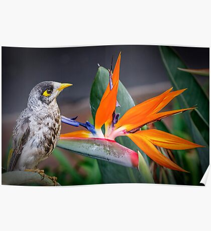 Bird in Paradise Poster