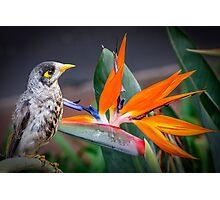 Bird in Paradise Photographic Print