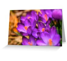 Art Of the Crocus 7 Greeting Card
