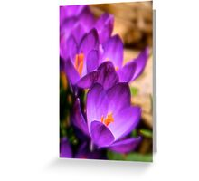Art Of the Crocus 5 Greeting Card