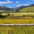 Pyengana Valley - Tasmania by clickedbynic