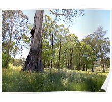 Australian Country Scene 3 Poster