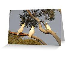 Four Cockatoos Greeting Card