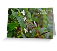Glasswinged Butterfly Mother's Day Card Greeting Card