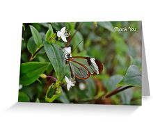 Glasswinged Butterfly Thank You Card Greeting Card