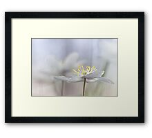 Addictive wood anemone.. Framed Print