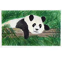 Playful Panda Photographic Print