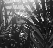 Sunshine Through Palm Leaves by tropicalsamuelv
