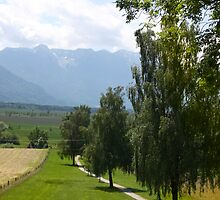 Pathways to Murnau Moos by SmoothBreeze7
