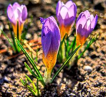How nice to wake up to this recurring miracle of Spring ... by Rick Gold