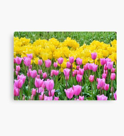 Tulip Melody Canvas Print