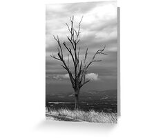 Last Stand Tree Greeting Card