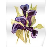 Black Forest Calla Lilies Poster