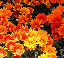 May Flower Festival-Tuscany by Deborah Downes