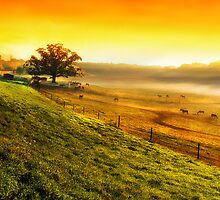 Hazy Summer Morning by Bruce Taylor