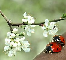 Spring by Gilberte