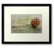 Rock a'bye baby in the treetop Framed Print