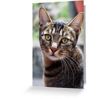 Curious Feline Greeting Card