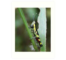 Green Bug on Stem Art Print