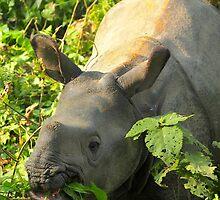Baby Rhino Feast by Chelsea McCann