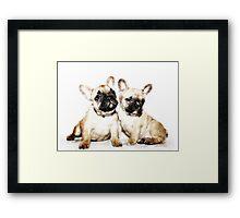 French Bulldogs Framed Print