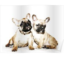 French Bulldogs Poster