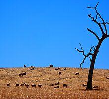 Farming this Big Brown Land by D-GaP