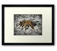 ©NS Bee Close IIABT Framed Print